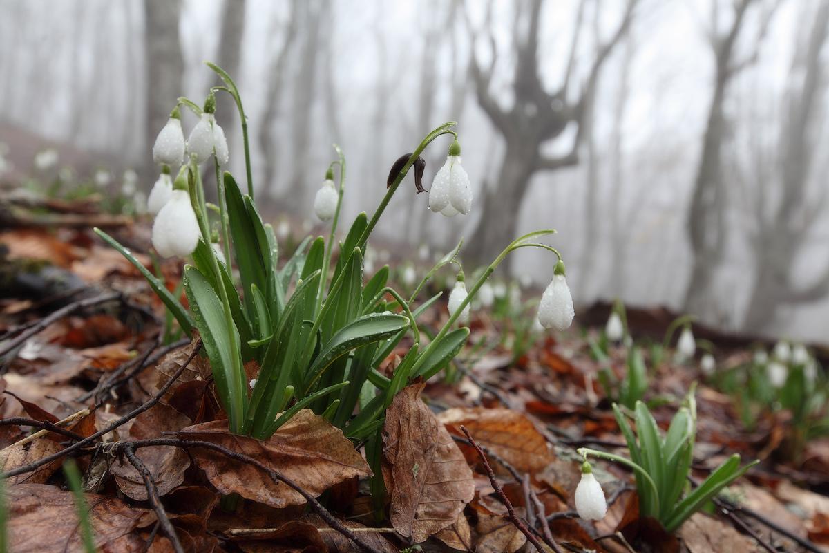 актрисе однако картинки про апрель обои сочетании яркими