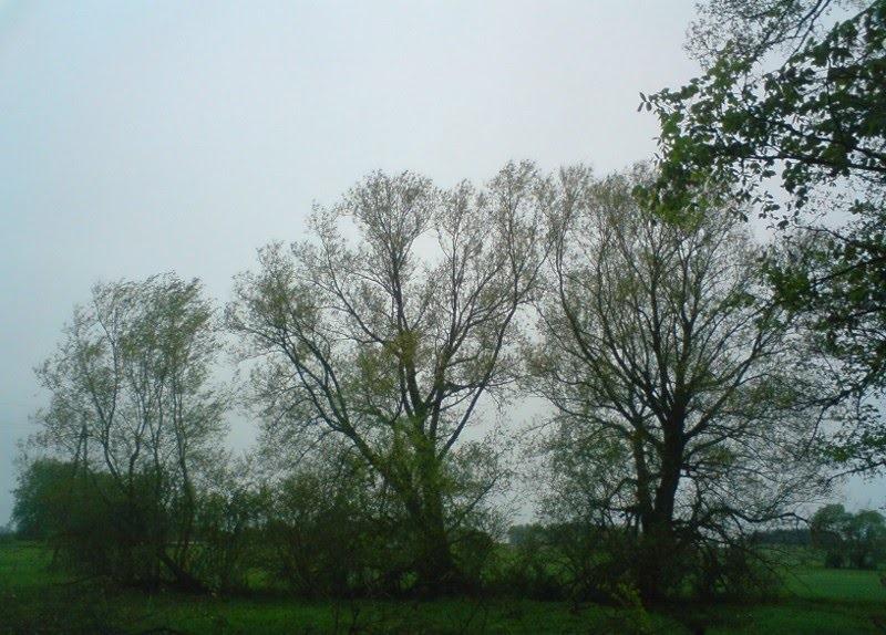 Погода в Ангарске 15 мая: прогноз, приметы и видеообзор