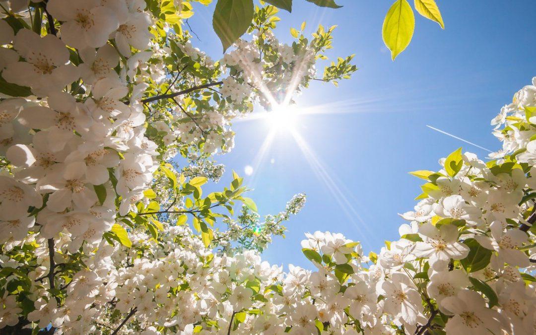 Погода в Ангарске 17 мая: прогноз, приметы и видеообзор