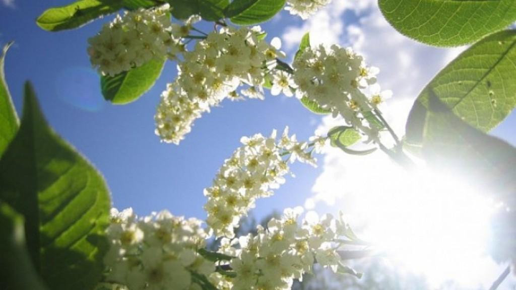 Погода в Ангарске 18 мая: прогноз приметы и видеообзор