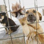 Бездомных собак в Иркутске теперь будут ловить только в присутствии волонтёров(видео)