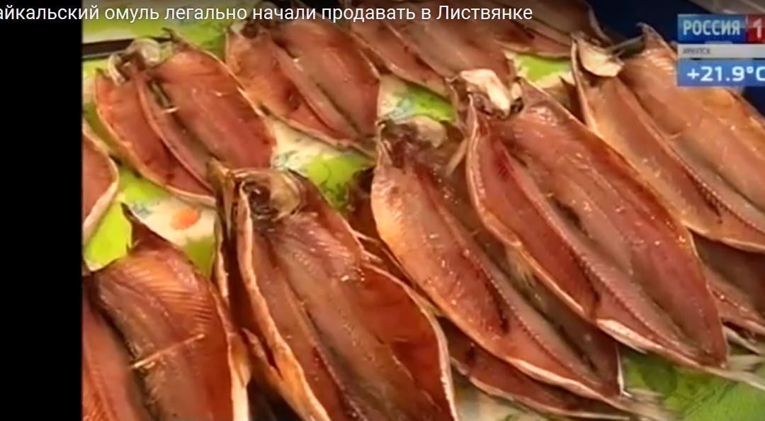Байкальский омуль легально начали продавать в Листвянке(видео)