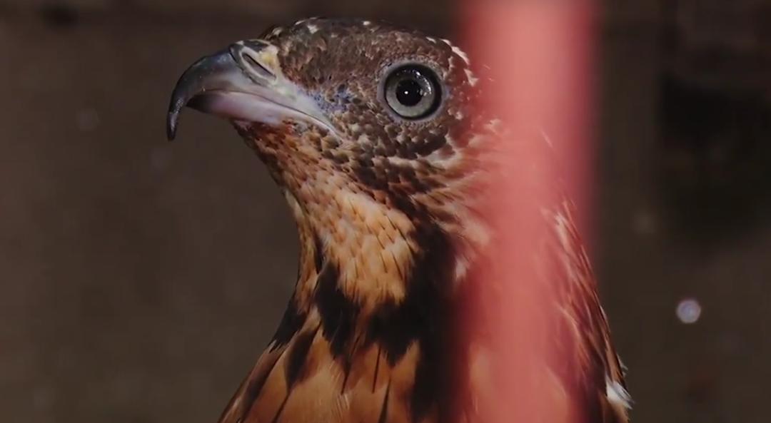 Ангарскому зоопарку нужна помощь!(видео)