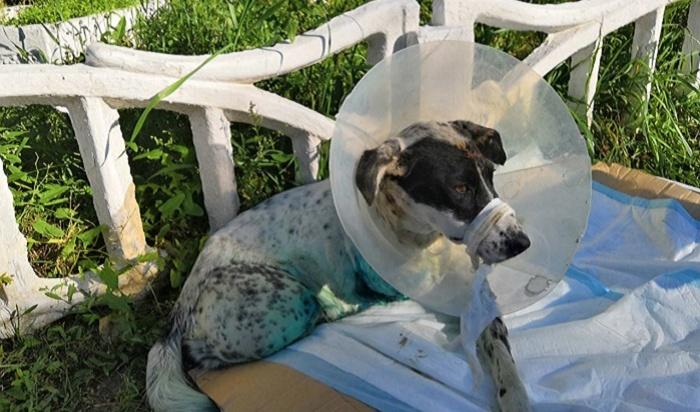 Собаке из Ангарска напечатают лапы на 3D-принтере