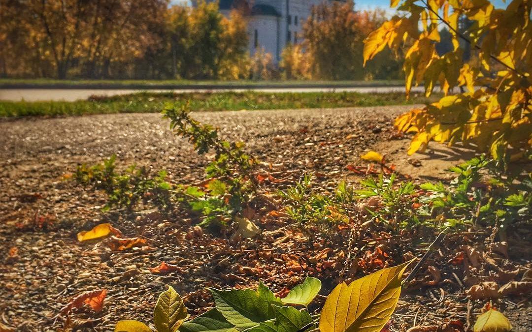 Ангарск. Краски уходящей осени… (видео)