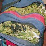 Полкилограмма марихуаны изъяли у ангарчанина