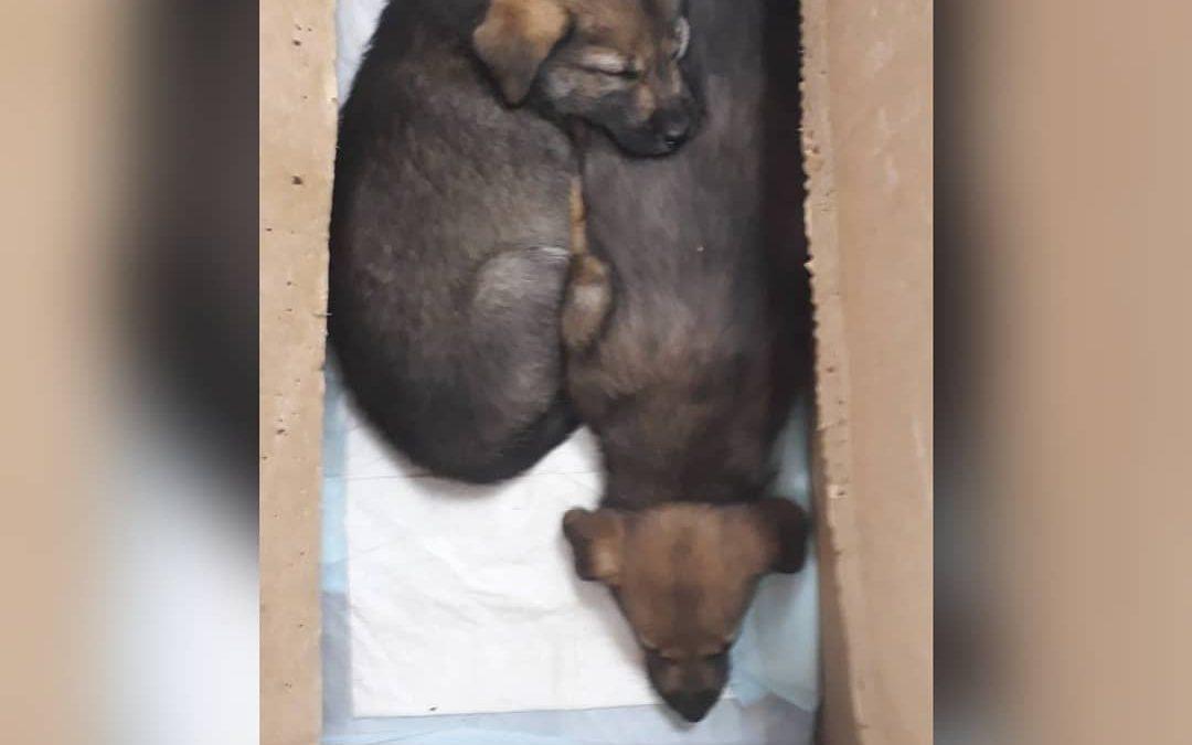 Неизвестный подбросил щенков под дверь ветклиники (видео)