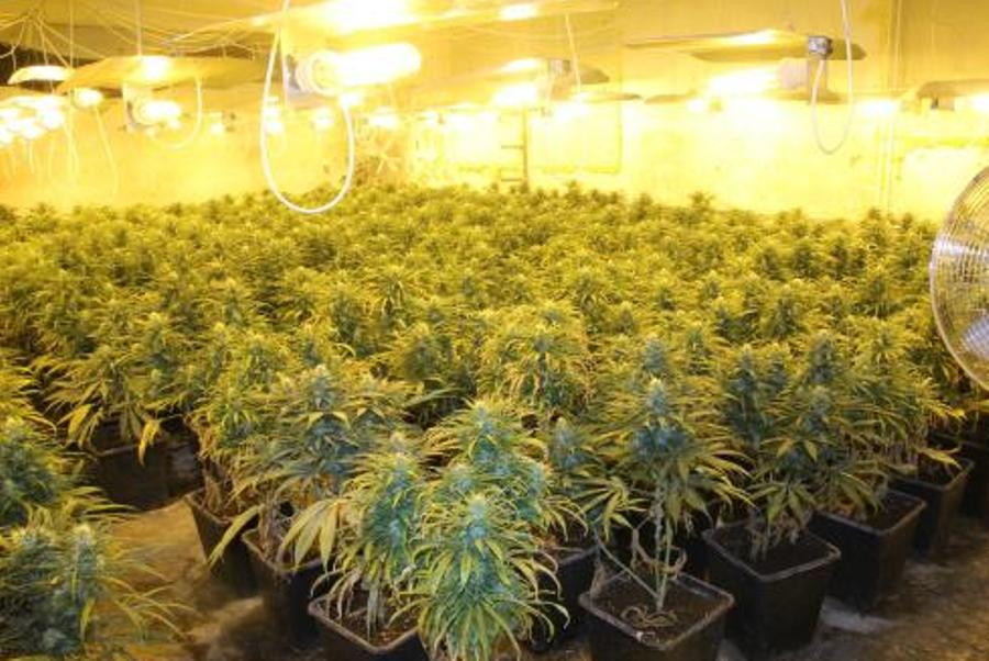 Видео домашнее марихуаны абстиненция при марихуане