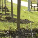Ангарчанина заставили оплатить посадку деревьев
