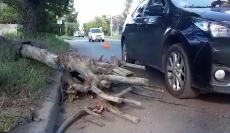 Ангарчанин отсудил у администрации АГО 161 тыс за упавшее на авто дерево (видео)