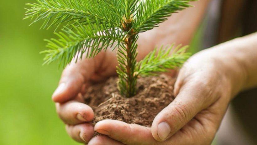 10 тысяч деревьев посадили в пострадавшем лесу Ангарского района