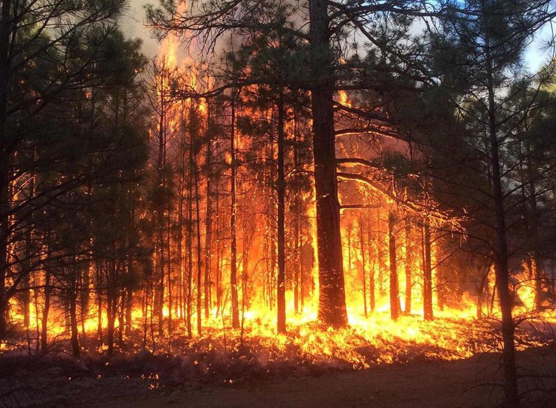 13 лесных пожаров потушили в Иркутской области за выходные (видео)