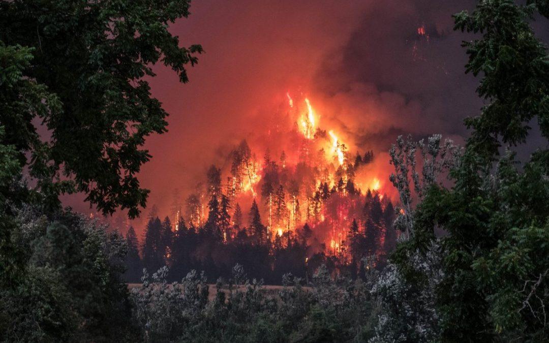 Площадь горящих лесов в Иркутской области выросла более чем в два раза (видео)