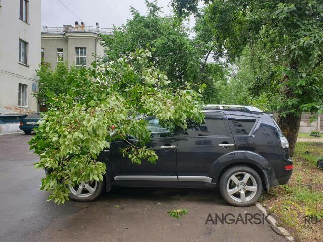 В Ангарске на припаркованное авто упала огромная ветка (+фото последствий)