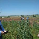 В Иркутской области полицейские совместно с представителями муниципалитетов уничтожают поля с дикорастущей коноплёй (видео)