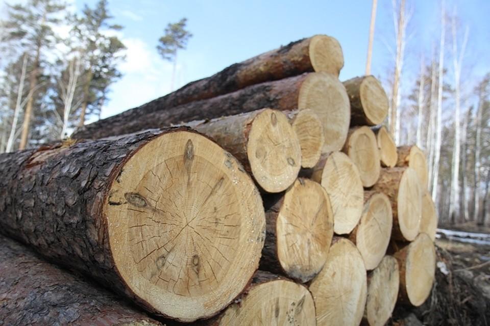Как уничтожали лес под Савватеевкой: по бумагам — геологи, по факту — лесорубы…