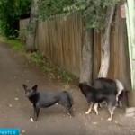 Новые требования по содержанию собак.
