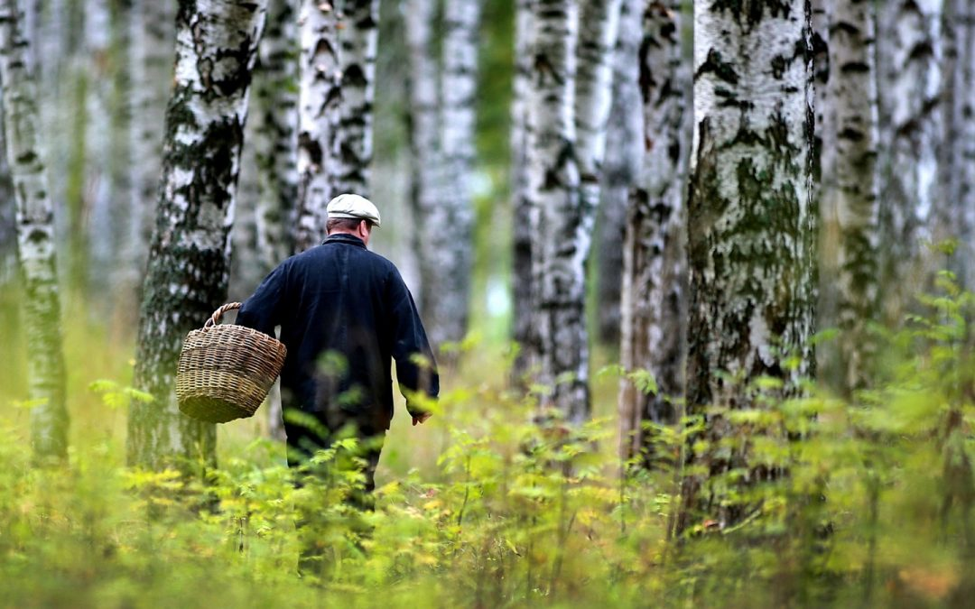 Житель Ангарска потерялся в лесу, пока искал свою родственницу.