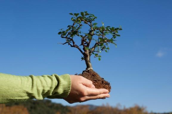 500 тысяч деревьев высадили в Иркутской области.
