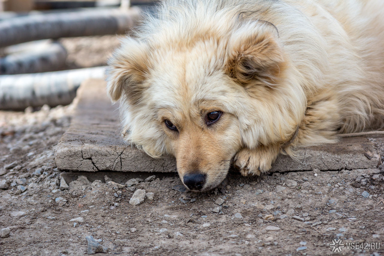 Бездомная собака картинка