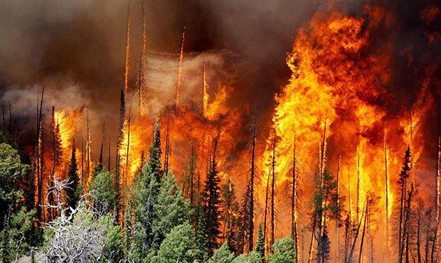 Площадь зон контроля в лесах Приангарья, где не тушат пожары, сократят в 3 раза.
