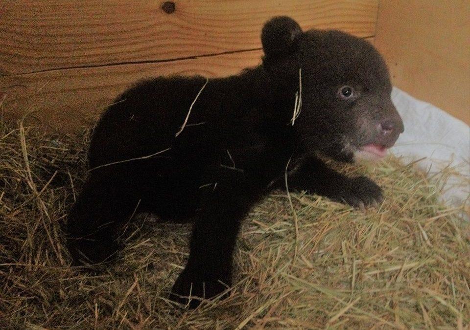 В Иркутский питомник «К9» подкинули медвежат. Видео.
