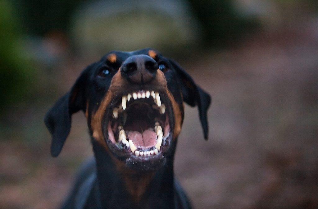 Внимание! Разыскивается злая собака!