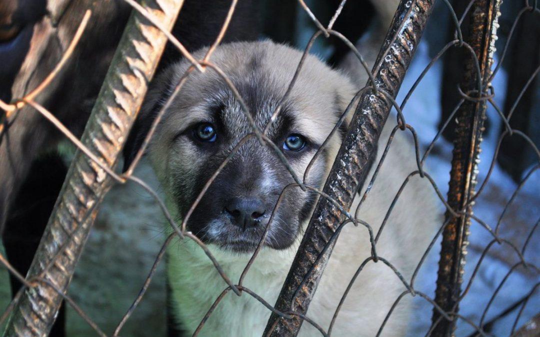 Установлена  стоимость услуг по отлову и содержанию брошенных животных