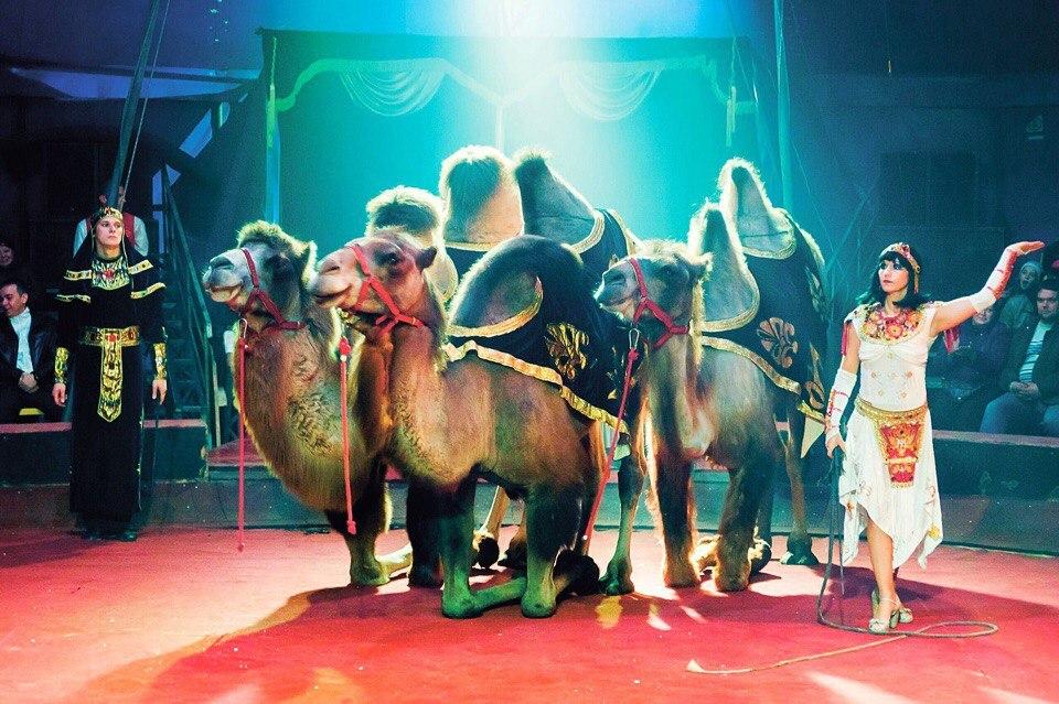 Ангарчане растрогали артистов цирка до слез, оказав им помощь в трудной ситуации (видео)