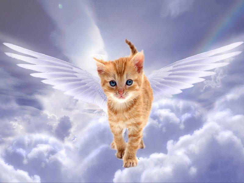 Ангарчанин отсудил у ветеринара деньги за смерть кота