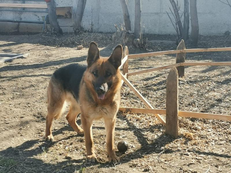 Служебно-розыскная собака помогла задержать подозреваемого в краже