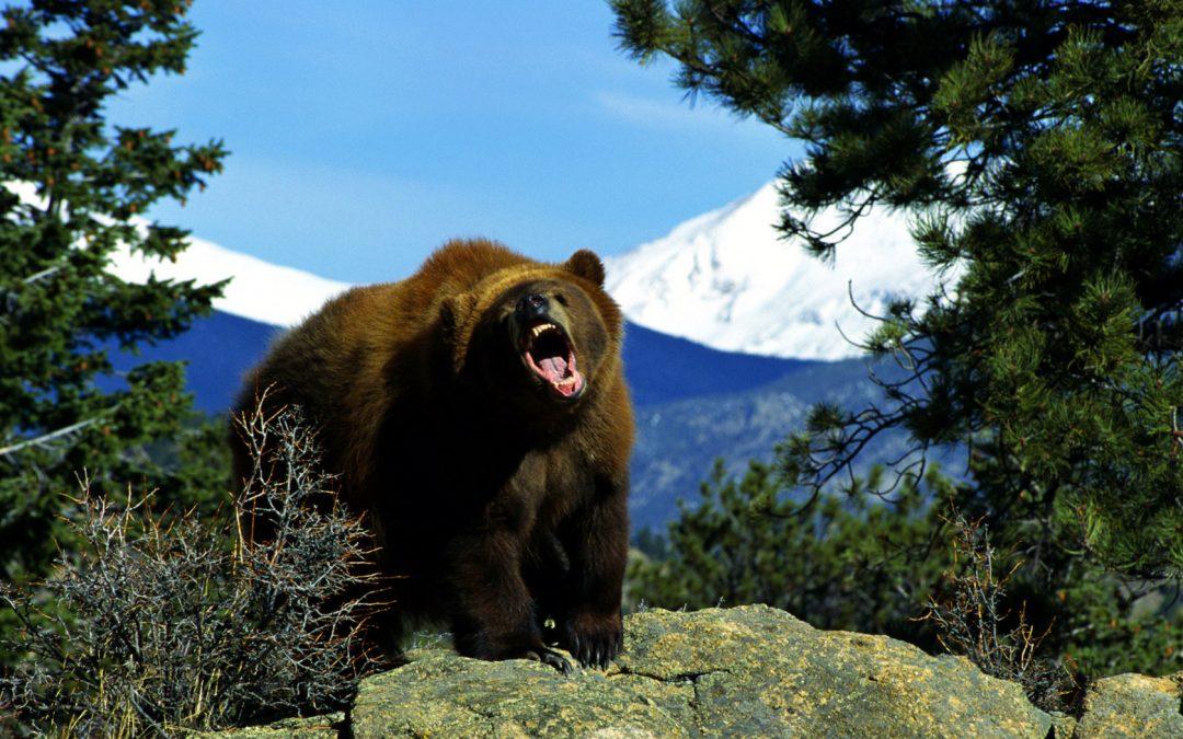 Медведи активизировались в районе Кругобайкалки
