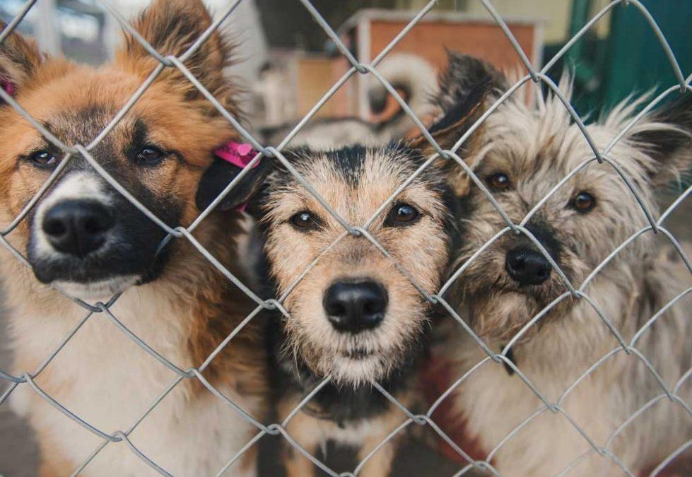 В Приангарье планируют открыть три центра для бездомных животных