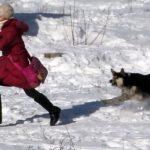 В Ангарске собака напала на 10-летнюю девочку