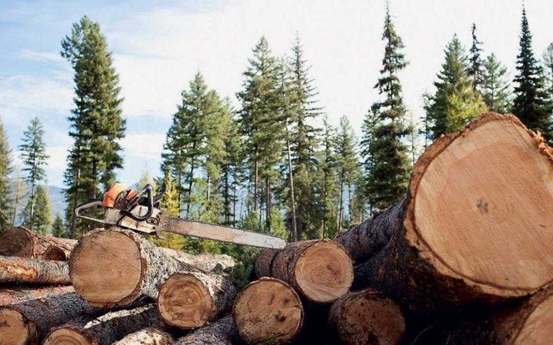 Ангарчанин предстанет перед судом за незаконную рубку леса