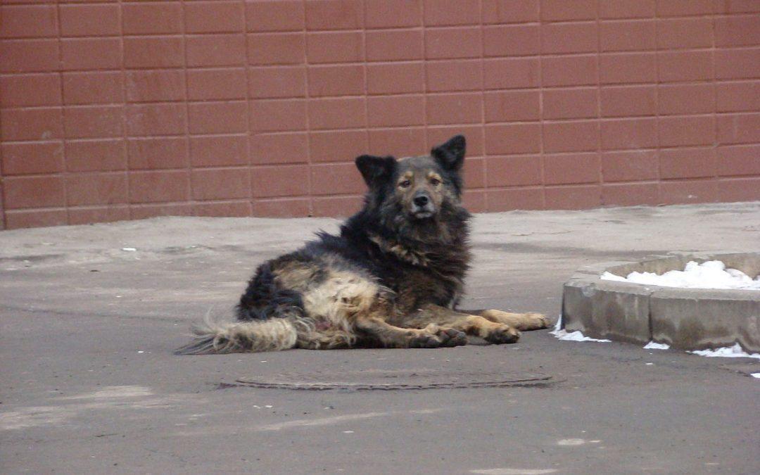 В России введут штрафы за брошенных животных