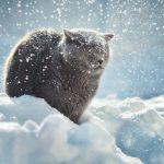 Погода в Ангарске 24 января