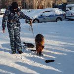 «Студенческий десант» побывал в гостях у полицейских-кинологов