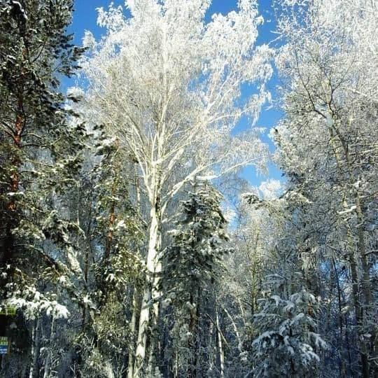 Погода в Ангарске 15 января