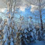 Погода в Ангарске 23 января