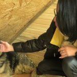 Иркутянка украла деньги на лечение сбитой собаки