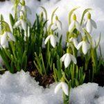 Погода в Ангарске 8 марта