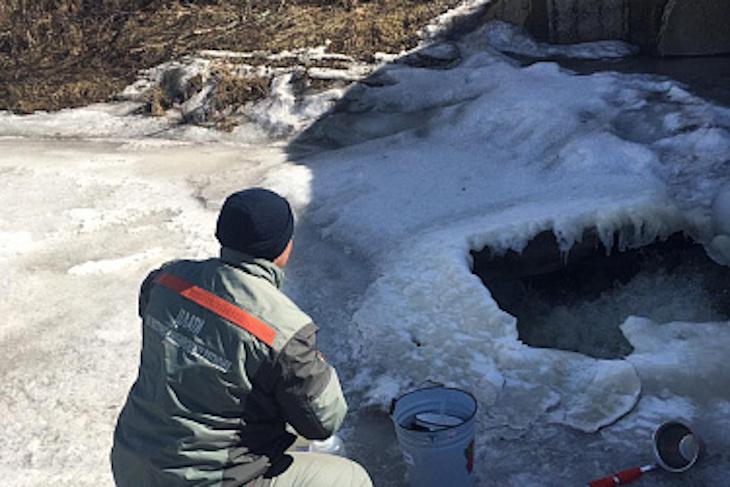 Внеплановую проверку «Усольского свинокомплекса» проводит Росприроднадзор после загрязнения рек.