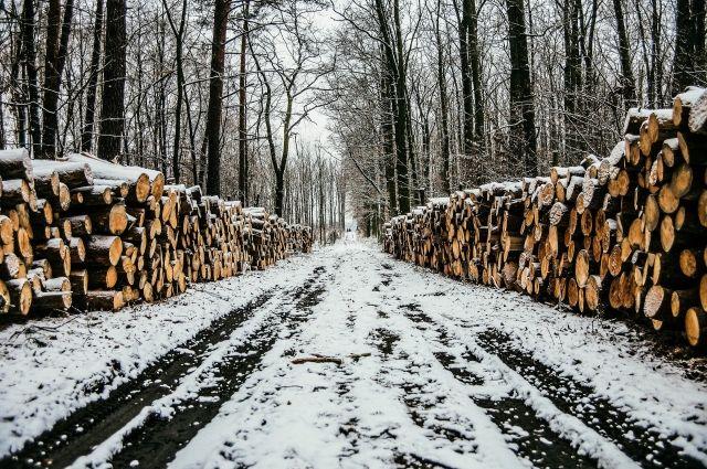 Таможенники пресекли канал контрабанды леса, организованный иркутской «бизнес-леди»