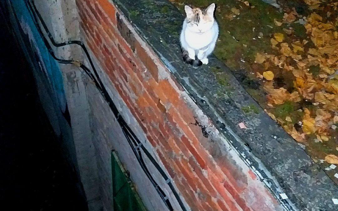 Ангарчанин упал с крыши, спасая кошку