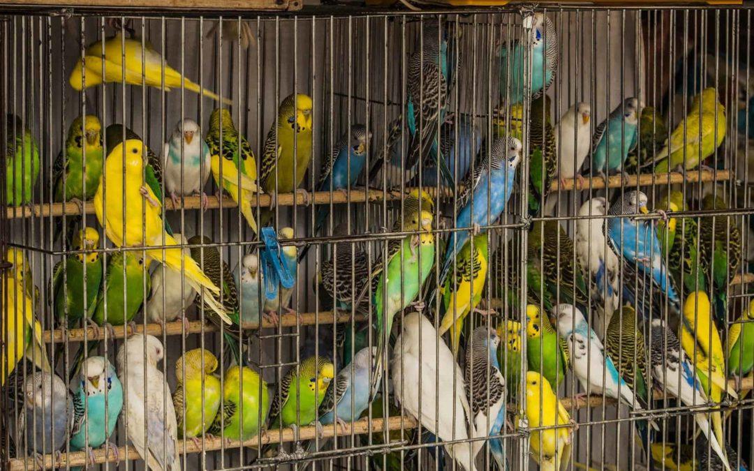 Никаких животных в зоомагазинах и на птичьих рынках