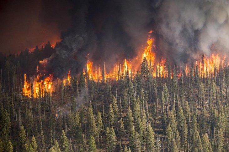 Гидрометцентр назвал свою причину пожаров