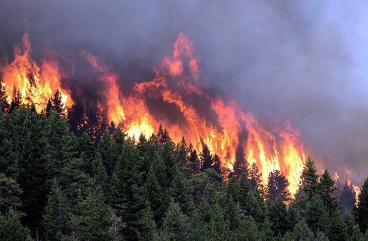 Greenpeace назвал причину пожаров в Иркутской области