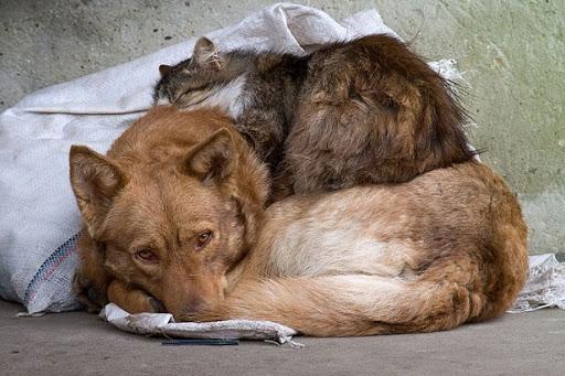 Гранты на открытие приютов для бездомных животных начнут выдавать в Иркутской области.