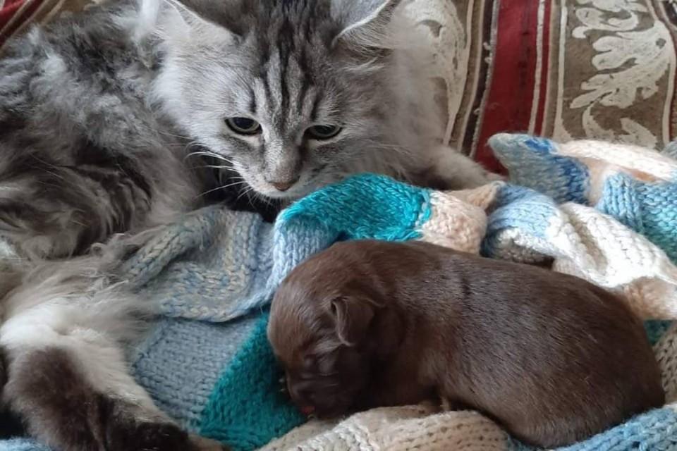 Смыли в унитаз… в Ангарске новорожденного щенка спасли из канализационной трубы.